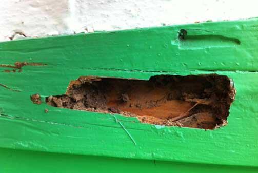 Afectación por termita y carcoma