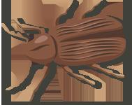 Carcoma Pequeña
