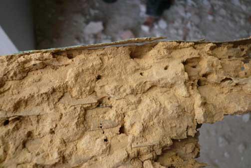 Madera afectada por termita y carcoma