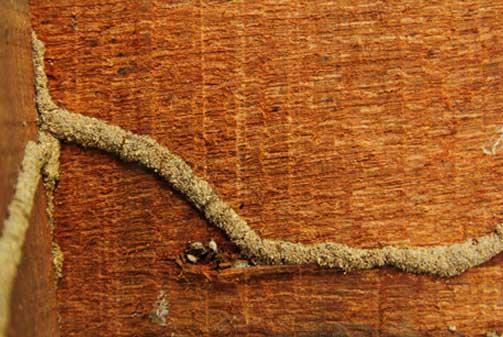 Problema de termita y carcoma